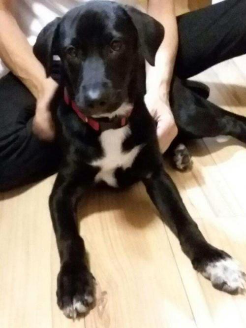 Adopt Lola On Dog Adoption Pet Adoption Homeless Pets