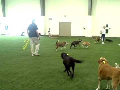 Faq K 9 Grass At Unleashed Indoor Dog Parks Youtube Indoor Dog Indoor Dog Park Dog Park