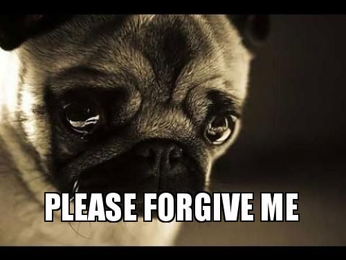Cute Funny I M Sorry Pictures With Sayings Puppies Praying Puppy Puppy Meme