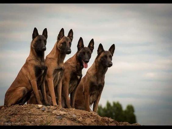 Favorite Dog Breeds