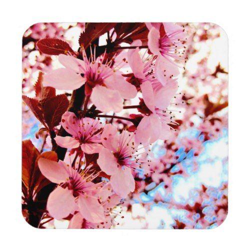 Spring Cherry Blossom Japanese Sakura Tree Photo Beverage Coaster Sakura Tree Japanese Sakura Blossom Trees