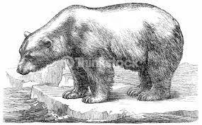 Afbeeldingsresultaat voor ice bear illustration