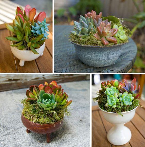 succulents in original ceramic planters
