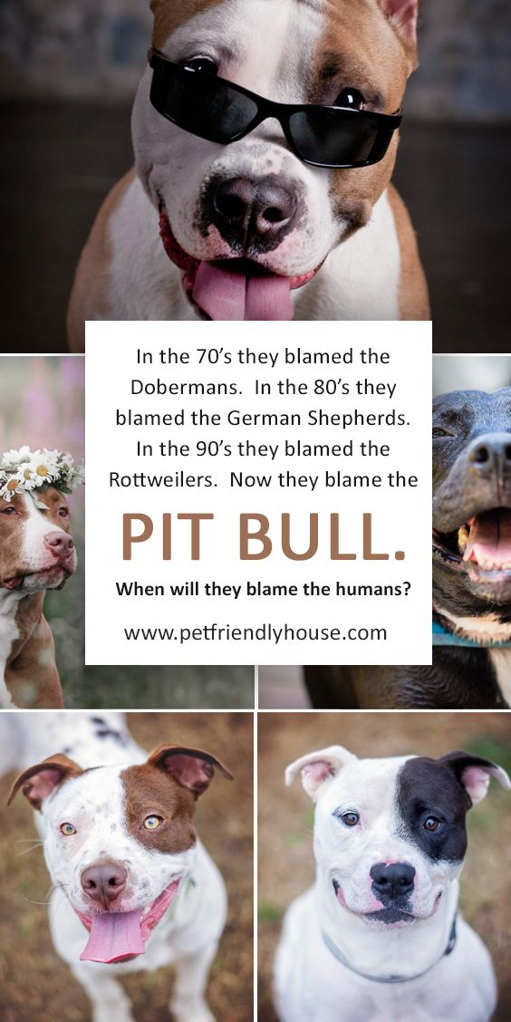 Should Pit Bulls Be Banned Pitbulls Dog Biting Bully Breeds