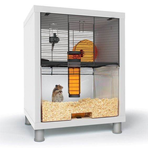 how to find a hampster in a house