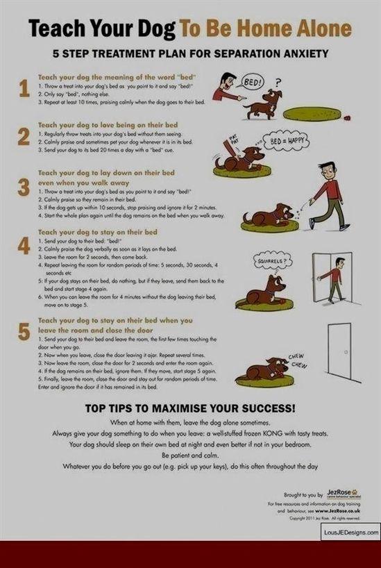 Dog Training Goes Wrong Dog Training Pads Large Dog Training