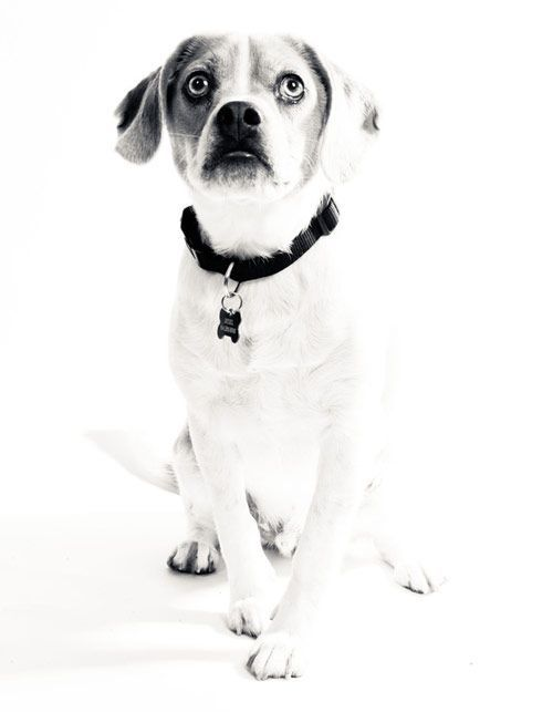 Pictures Of Dogs With A White Background