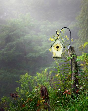 Birdhouse in the country