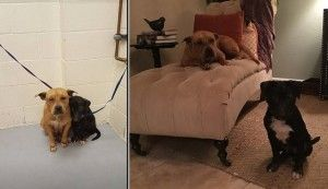 Neglected & Terrified, Two Dogs Finally Feels What It's Like To Have A Loving Home