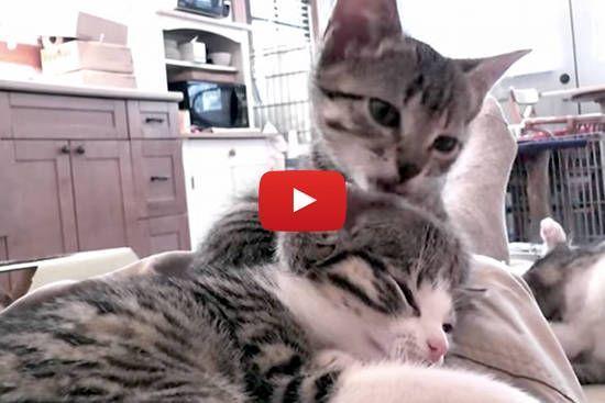 Big Eyed Bunny Kitten Love Kittens Cats And Kittens