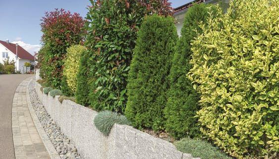 Heckenarten Ratgeber Und Tipps Zur Pflanzung Obi Gartengestaltung Bilder Garten Pflanzen
