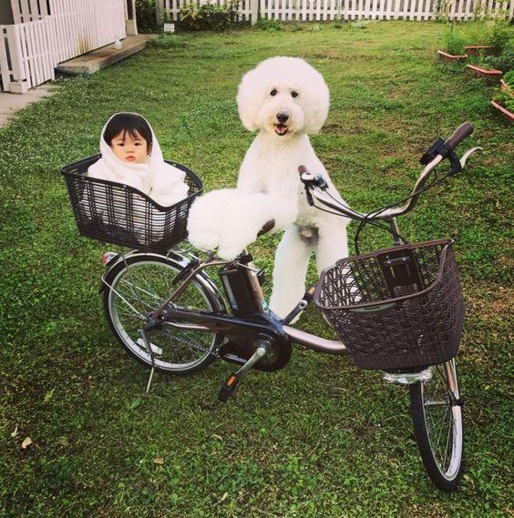 自転車に乗る犬と赤ちゃん