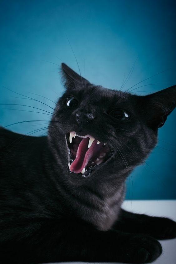 Wild miau