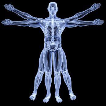 Anatomy的圖片搜尋結果: