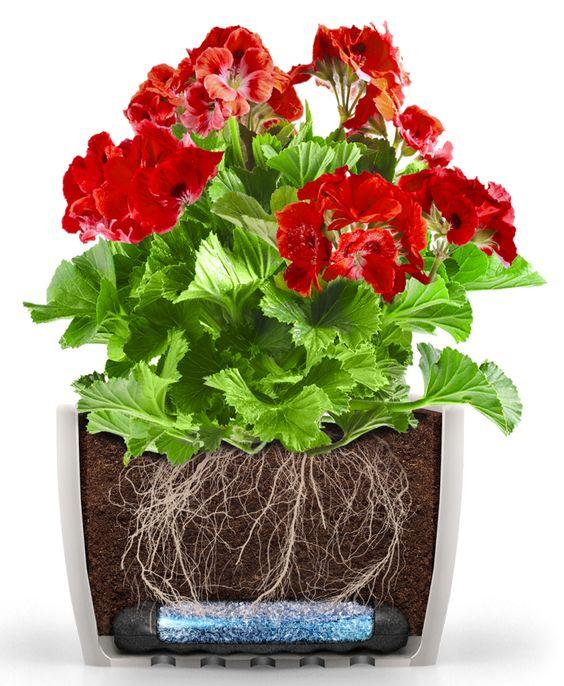 Polecany do roślin posadzonych w skrzyniach, korytkach i donicach podłużnych (np. pelargonie, surfinie, fuksje, niecierpki, petunie, barwinki). #hydrobox #hydroboxpl #kwiaty #kwiatydoniczkowe #doniczki #kwiatybalkonowe #pelargonia #surfinia #petunia #flowers #ideas #homedecor #watering #nawadnianie