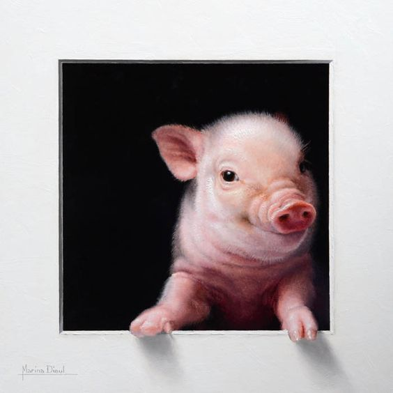 Cochon 1  -  Marina Dieul: