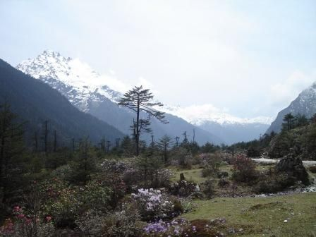 #Lachung is one of the best place to spend holidays with families...There are many attractive places in Lachung , such as Lachung Gompa , Shingba Rhododendron Sanctuary , Yumthang Valley and many more... #LachungHotels , #HotelsInLachung , #BudgetHotelsInLachung
