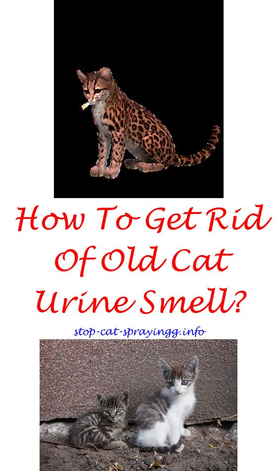 Build A Boat Lesson Plan Male Cat Spraying Cat Urine Smells Cat Pee Smell