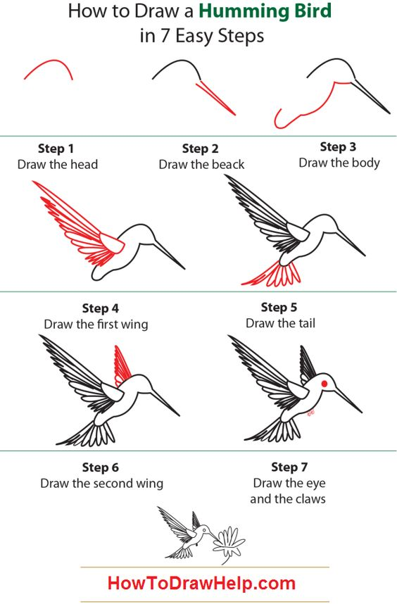 How to draw a humming bird learn to draw pinterest for Easy drawing websites