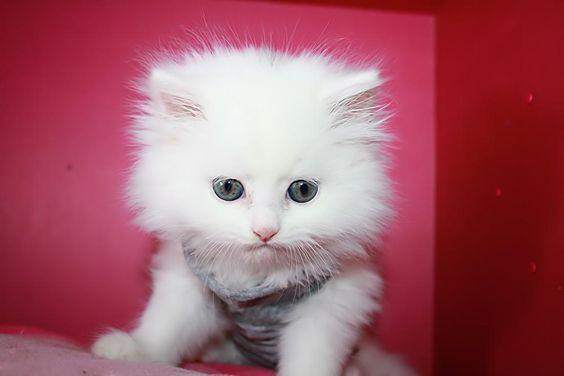 صور قطط باقة مختارة من أروع و أجمل القطط مع خلفيات Hd Cute Cats And Kittens Animals And Pets Cute Cats
