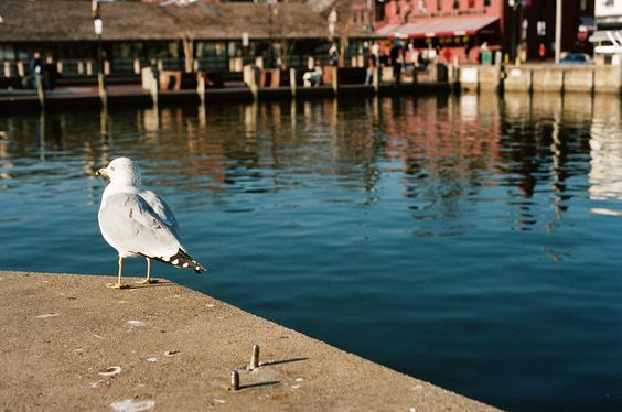 Waiting for Tourist Season | Annapolis, MD