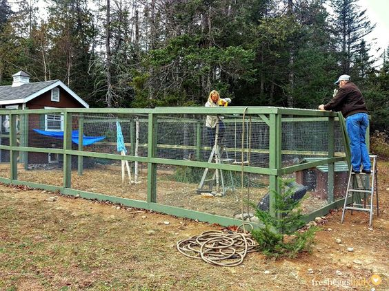 Building a chicken run chicken runs and the duck on pinterest for Enclosed chicken run plans