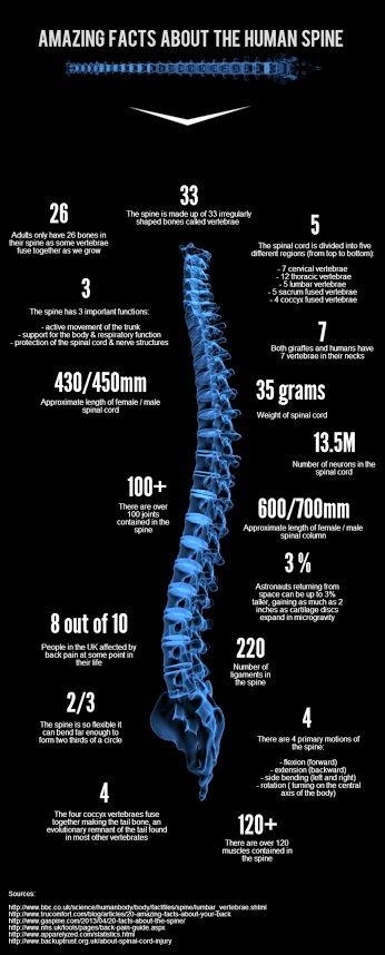 Amazing facts about the #human #Spine