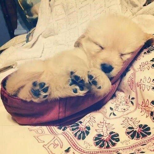 Cogivu: 15 cães que cometeram atos que vão deixar você apaixonados por eles | We Heart It