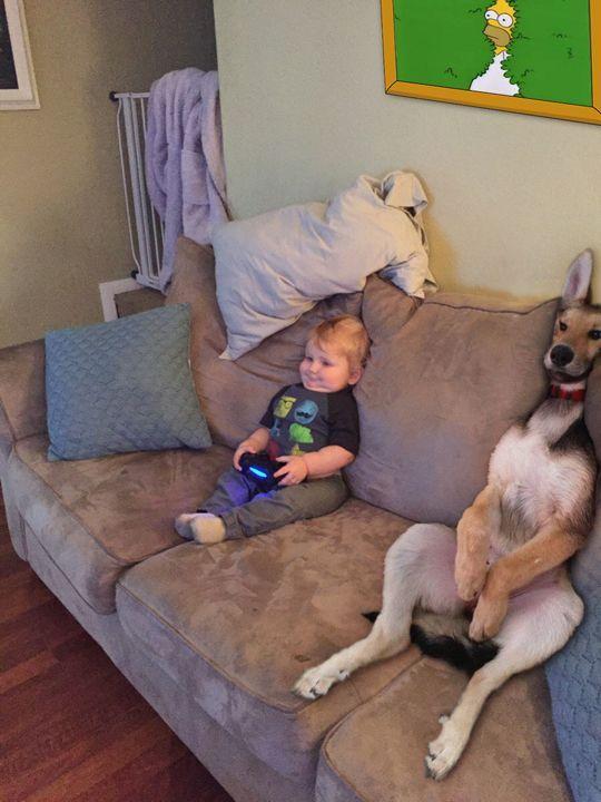ゲームをする犬と赤ちゃん
