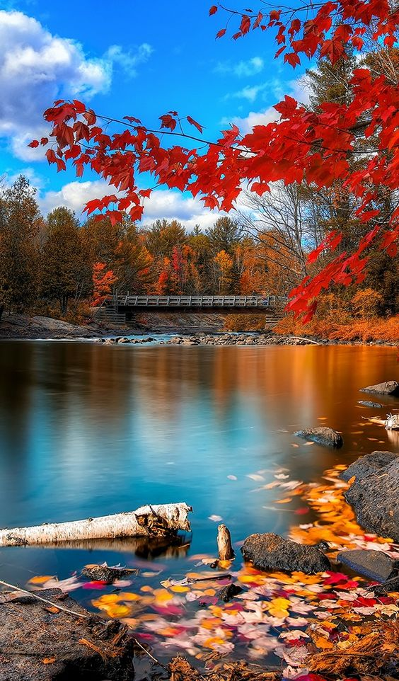Oxtongue Rapids at Algonquin Provincial Park in central Ontario, Canada • photo: fallen flowers on InterfaceLift: