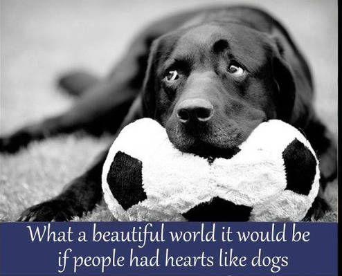 #dogsarethebest!