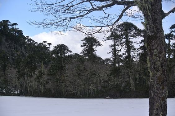 Why I'm having a conservation Christmas :http://www.wildlandscreative.com/blog/2014/12/why-im-having-a-conservation-christmas/