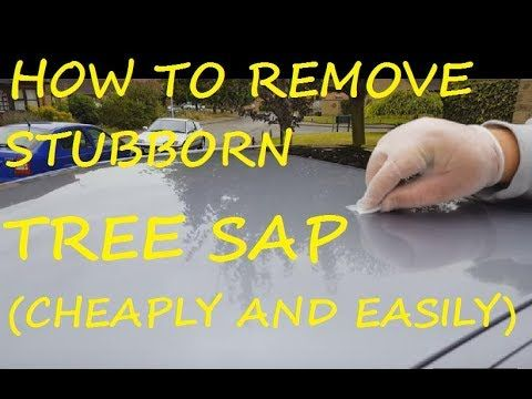How To Remove Hard Tree Sap From Car Bodywork Youtube