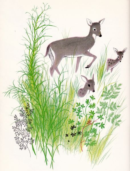 Deer Illustration by Adrienne Adams
