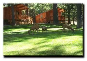 Harmony Ridge Resort located in beautiful Nevada City, California. Nearby lakes, rivers, skiing, hiking, biking and horseback trails.