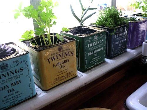 Plantation dans de vieilles boîtes à thé. - Plantation in old tea boxes.