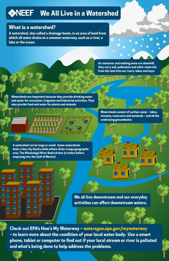 NEEF Infographic: We All Live in a Watershed