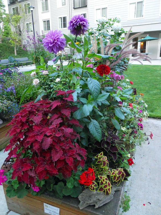Plants & Flowers For Small spaces