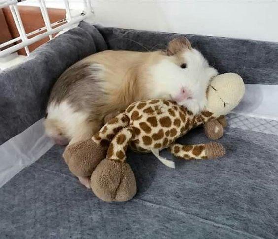 Ich mag meine Giraffe