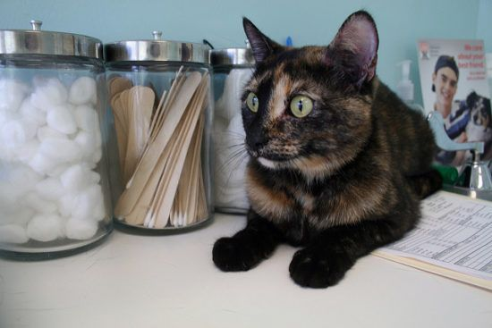 7 Things Pet Owners Do That Drive Veterinarians Crazy Kitten