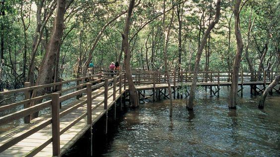 Công viên Bảo tồn đầm lầy Sungei Buloh
