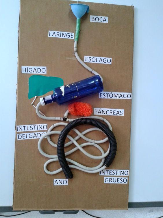 Hemos construido un mural-maqueta del aparato digestivo con materiales reciclados para enseñar a los niños las importancia de las tres R (R...