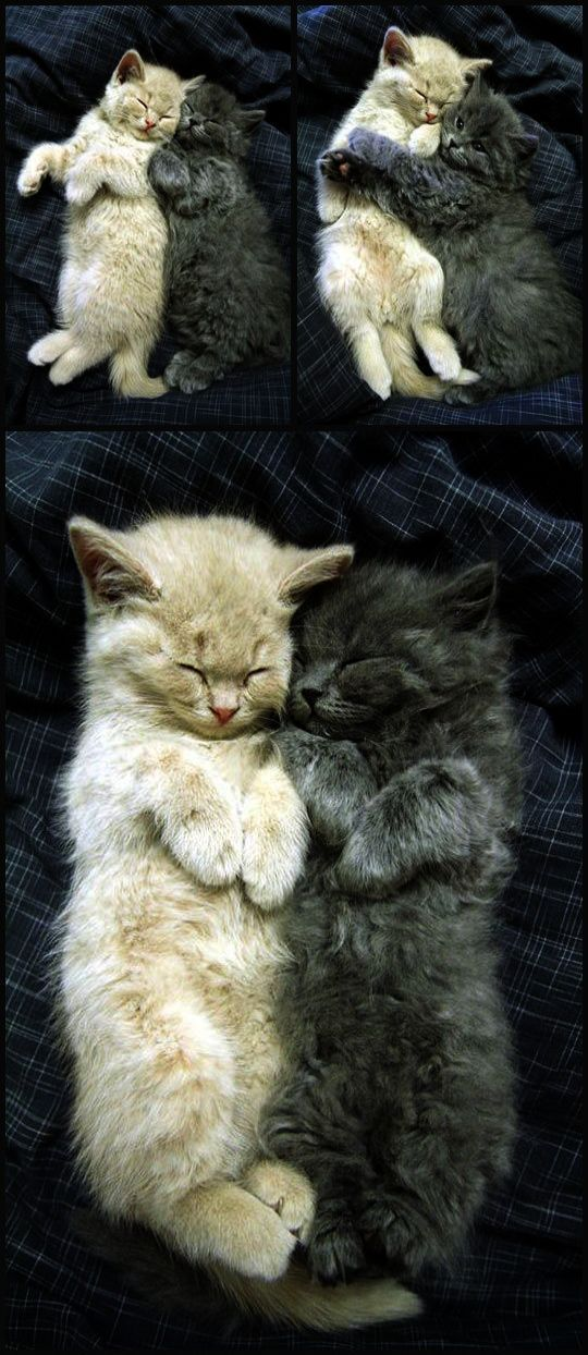 Pin By Ellie Katherine I Follow Back On Animals Pets Kittens