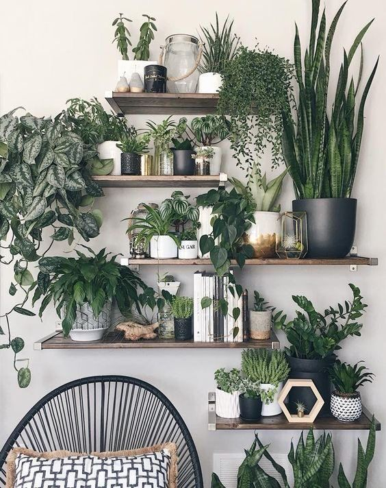 Pin By Sandy Starr On Plant Ideas Plant Decor Indoor House Plants Decor Plant Decor