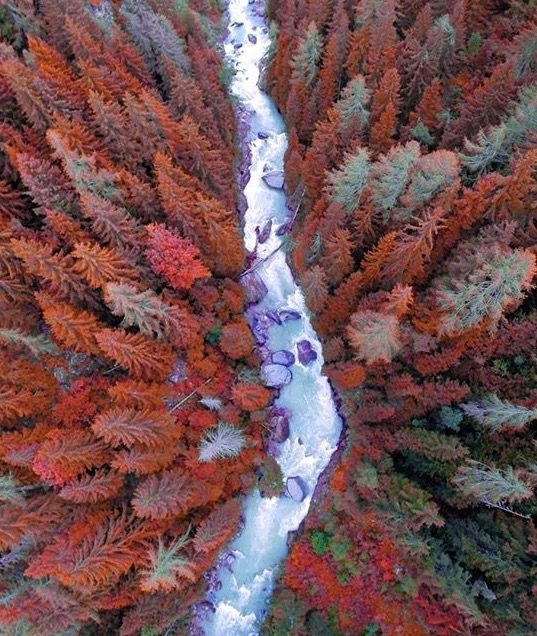 Drone view of the alien forrest of Ernen, Switzerland ///