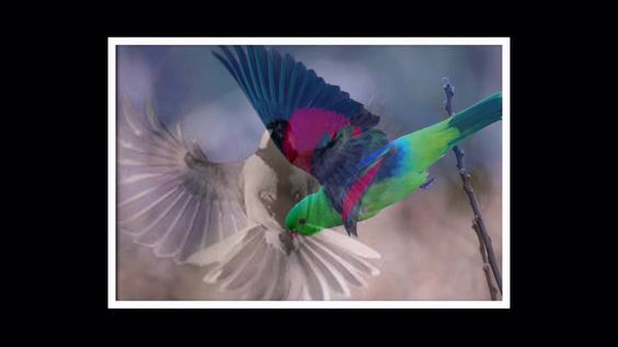 Amazing Bird of the World|Wild|Animal