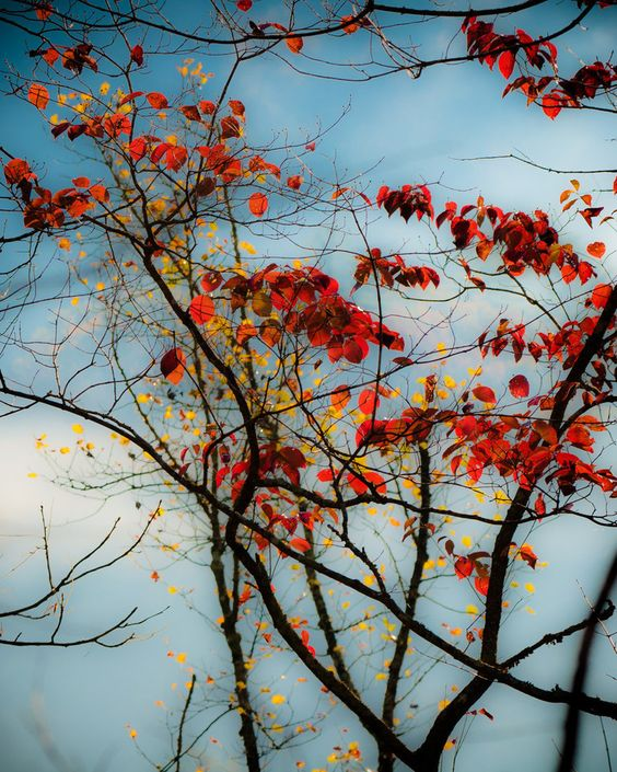Autumn Color  www.douglasadamsphotography.com