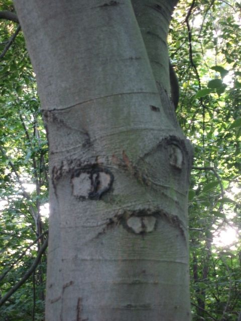 faces in nature - Google Search