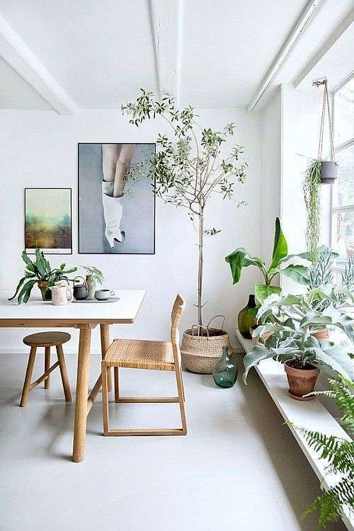 home decor - jungle style