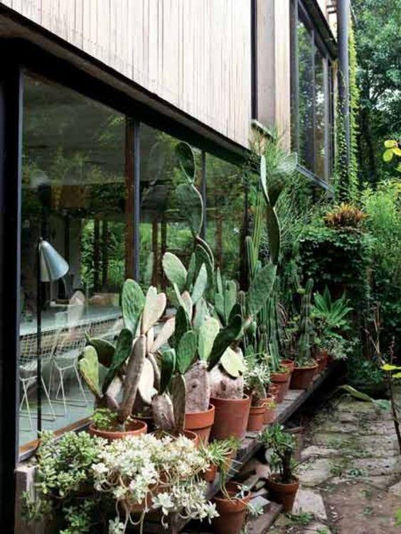 簡潔で厳格なラインが特徴的なこの家は、さまざまな素材がミックスされ、プライバシーの保護に自然が活かされている。こちらの写真のあたりも、サボテンや生い茂る緑が家全体を取り囲んでいることがうかがえる。 スティコッティにとって、たとえ1本の木でも倒してしまうことはありえないこと。植物との関係が考え抜かれているこの空間では、ここが住宅地であるにもかかわらず、完全に熱帯林にいるような感覚におそわれる。